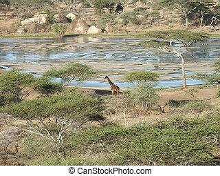 savannah - african landscape