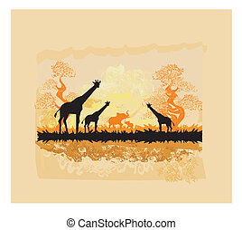 savannah, africano