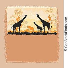 savannah, cartão, africano