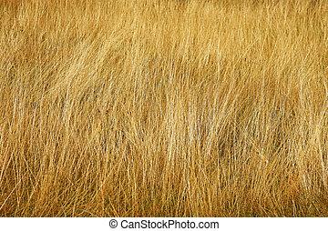 Close up shot of yellow savannah grass