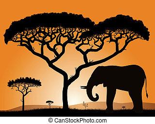 Savannah - elephant. Dawn in the African savanna....