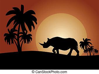 Savannah - Rhino at sunset in the savannah