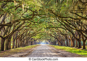 Savannah, Georgia, USA Historic Road - Savannah, Georgia,...
