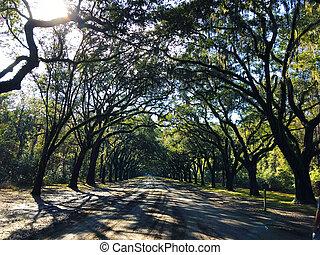 Savannah, Georgia, USA Oak tree lined road, arc shape at Historical Wormsloe Plantation Site