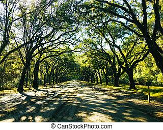 Savannah, Georgia, USA Oak tree lined road, arc shape at Historical Wormsloe Plantation