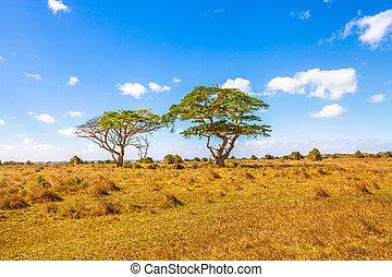 savannah, krajobraz, afrykanin