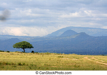 Savannah - Murchison Falls NP, Uganda, Africa - Savannah at...