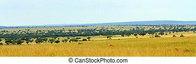 savannah, panorama, uganda