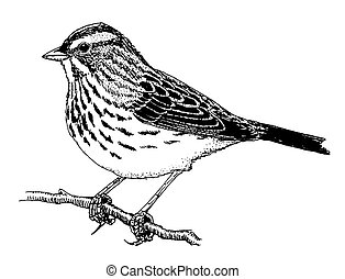 sparrow clipart and stock illustrations 4 380 sparrow vector eps rh canstockphoto com sparrow clipart black and white sparrow clipart png