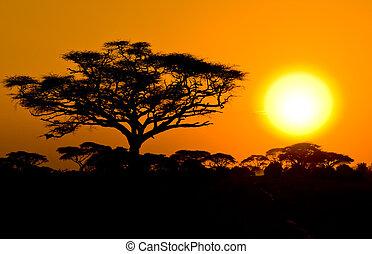 savannah, zachód słońca, afrykanin