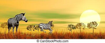 savannah, zebras