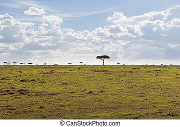 savanne, akazie, afrikas, landschaftsbild, bäume