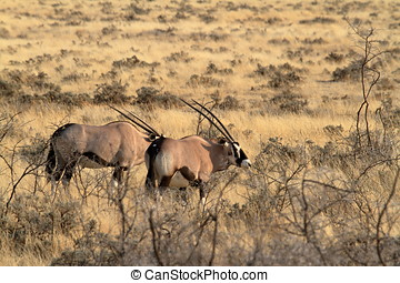 savanne, antilope, oryx