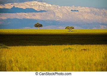 savanne, bäume, afrikas, safari, kenya., landschaftsbild