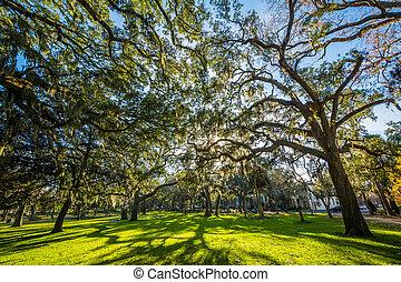 savanne, georgia., bomen, park, forsyth, spaans mos
