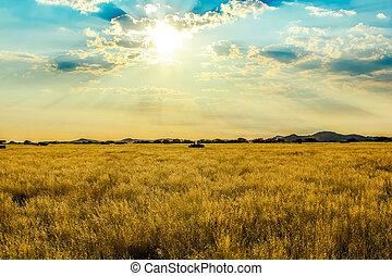 savanne, landschaftsbild
