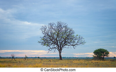 savanne, morgen