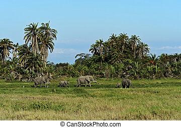 savanne, olifanten