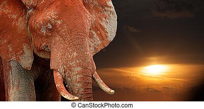 savanne, ondergaande zon , afrika, elefant