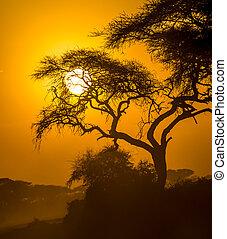 savanne, ondergaande zon , afrikaan