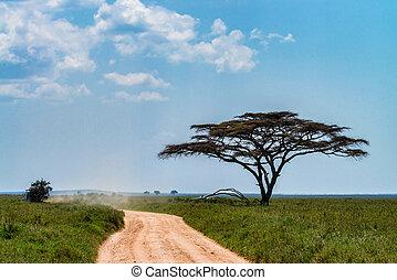 savanne, schöne , straße, landschaftsbild