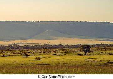 savanne, sonnenuntergang