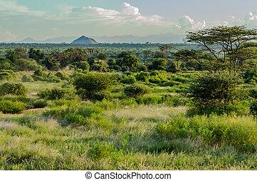 savanne, sporen, samburu, aanzicht