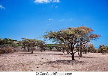 savanne, tansania, afrikas, landschaftsbild