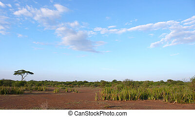 savanne, tansania