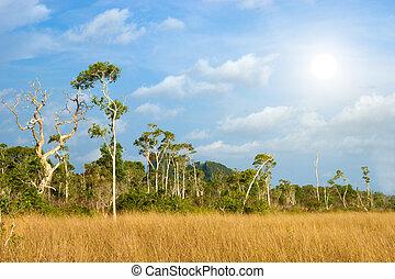 savanne, wiesen, trang, thailand.