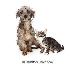save;, adoption;, homeless;, messy;, dirty;, solo, rescue;, adopt;, scared;
