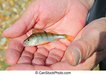 Save fish in our hands