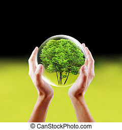 Saving nature concept - Hands holding a tree in a protected ...