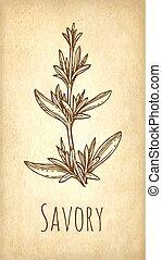 Savory ink sketch. - Savory ink sketch on old paper ...