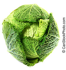 Savoy cabbage head with water drops. Isolated on white background.
