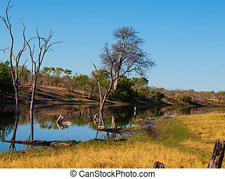Savuti Channel (Chobe National Park, Botswana)