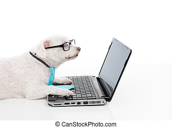 Savvy dog using a computer laptop - A smart dog or savvy...