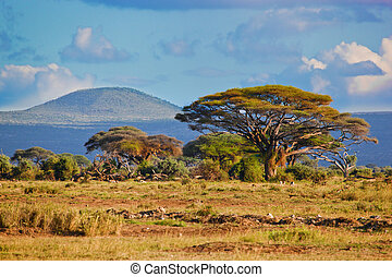 sawanna, afryka, kenia, krajobraz, amboseli