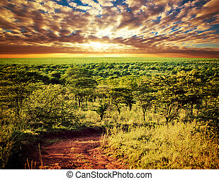 sawanna, tanzania, serengeti, krajobraz, afryka.