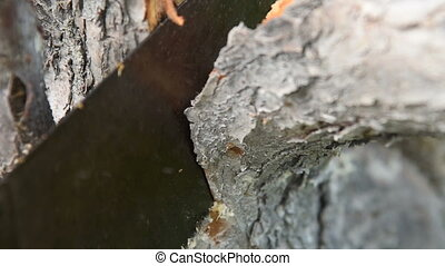 Sawing the branch of old tree - Close-up speed up shot of a...