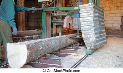 Sawing the stem of the tree in saw-mill