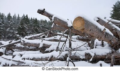 sawmill logs of pine trees in snow winter forest nature...