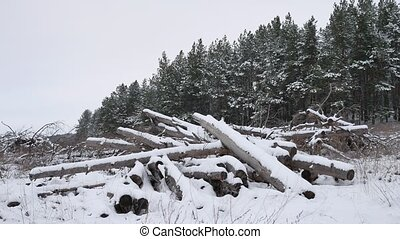 sawmill logs of pine trees in snow winter forest Christmas...