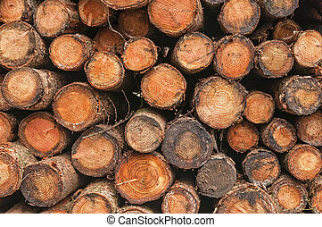 Sawn Log Background