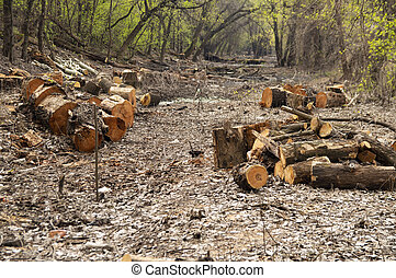 Sawn logs of trees in the forest