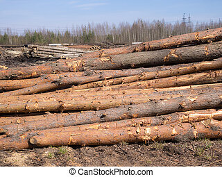 logs on the ground