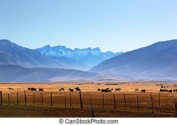 Sawtooth Ridge Formation, Bridgeport, California - The ...