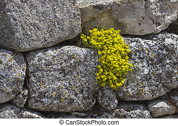 yellow flowers on a stone wall