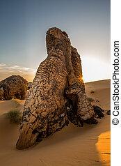 sba, サメ, 指, モーリタニア, 景色, ひれ, 区域, 埋め込まれた, 形成, 砂丘, es, 大きい, 岩