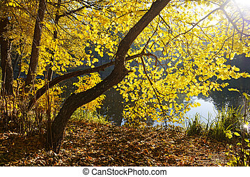 scène, automne
